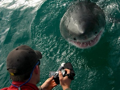 GreatWhite-Grootbos